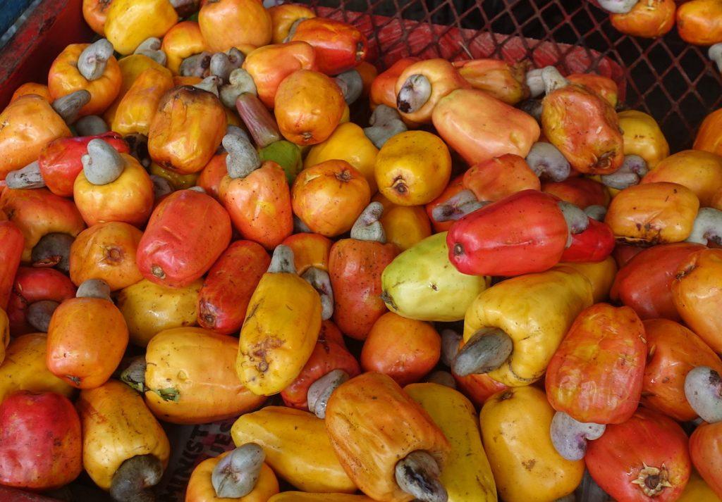 Marañon cashew fruit Costa Rica