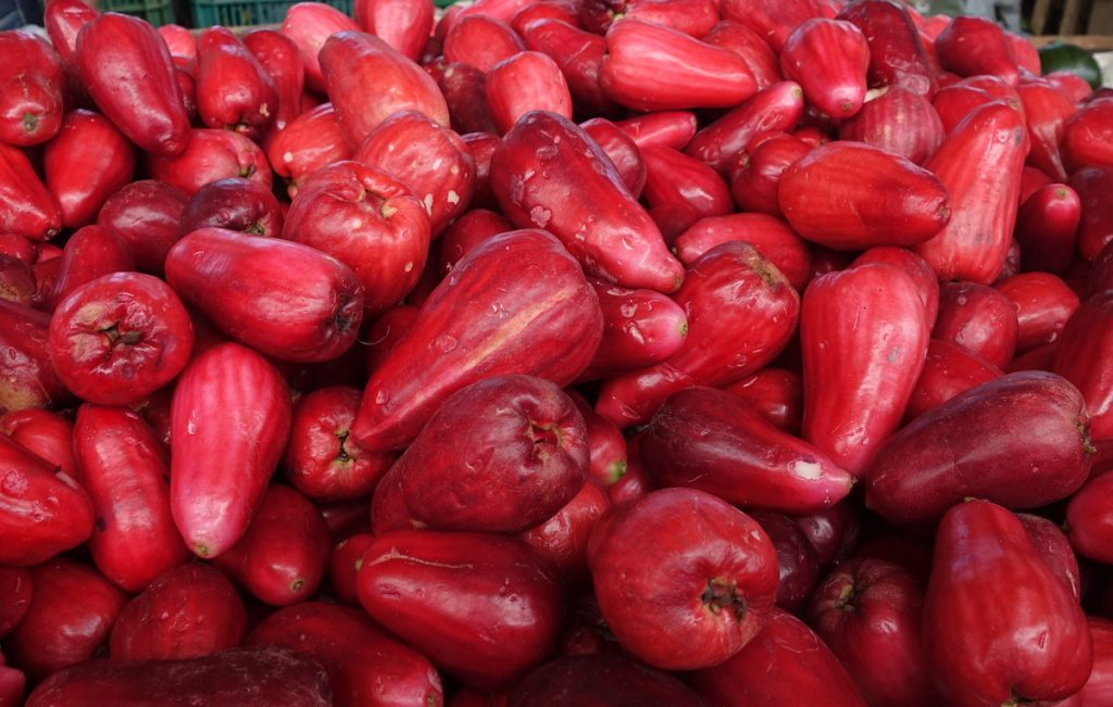 manzana de agua - wax or rose apple in Costa Rica